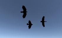 The Elder Scrolls II: Daggerfall Birds in Daggerfall...