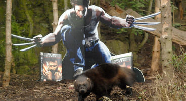 Activision partners with Edinburgh Zoo for bizarre Wolverine Promotional Campaign