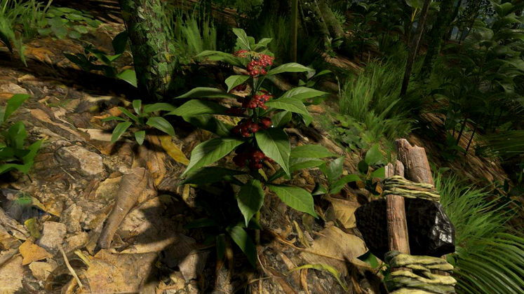 Green Hell Psychotria Location - How to find the plant to make Ayahuasca